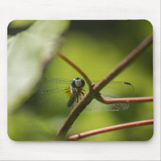 Cojín de ratón sonriente de la libélula alfombrilla de ratón