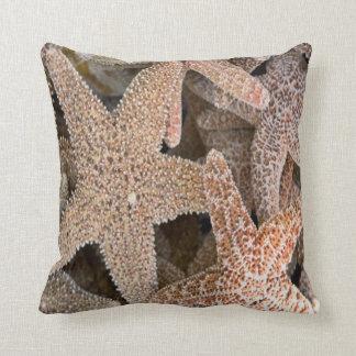 Cojín Decorativo Estrellas de mar todo alrededor