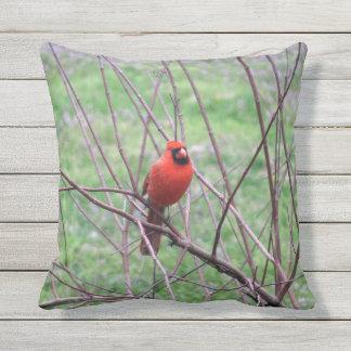 Cojín Decorativo Pájaro cardinal rojo