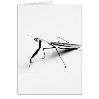 Colección de la mantis religiosa tarjeta