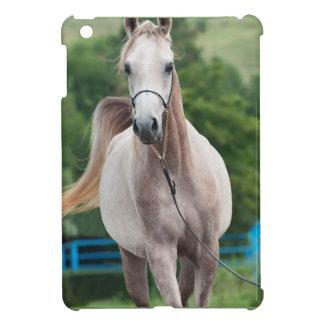 colección del caballo. árabe