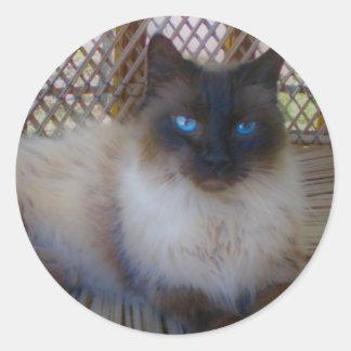 Colección del gatito de los ojos azules pegatina redonda