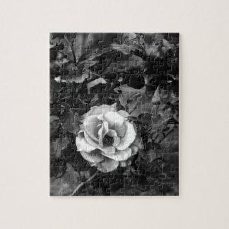 Colección del rosa blanco puzzle