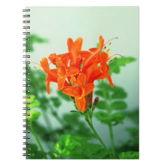 colección floral cuaderno