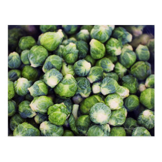 Coles de Bruselas frescas verdes claras Postal