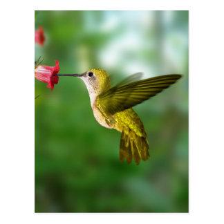 Colibri De Oro República Dominicana Postal