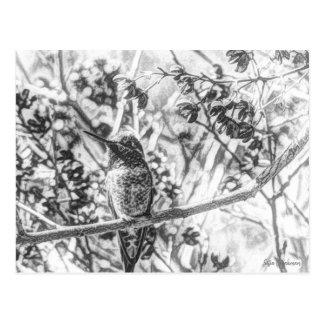 Colibrí en postal blanco y negro