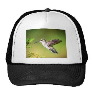 Colibrí en vuelo gorras