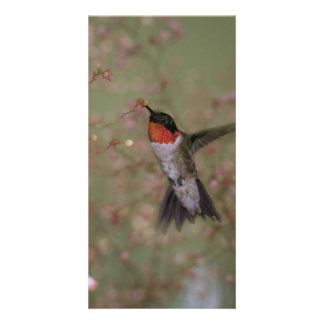 Colibrí Throated de rubíes que bebe de una flor Tarjeta Personal