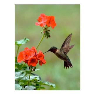 Colibrí y flores postal