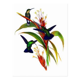 Colibríes coloridos exóticos postal