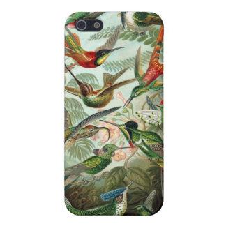 Colibríes de Haeckel iPhone 5 Carcasa