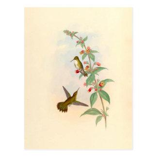 Colibríes y postal de las flores