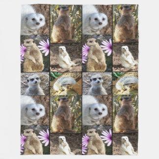 Collage de la foto de Meerkat, manta grande del