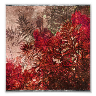 Collage floral de la belleza foto