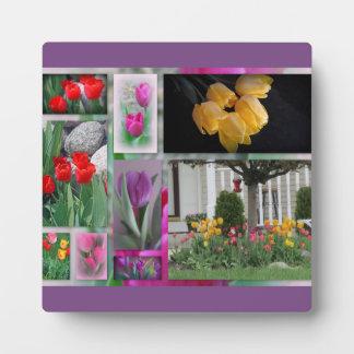 Collage hermoso de los tulipanes placa expositora