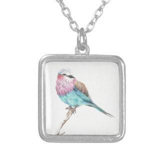 Collar colorido del pájaro