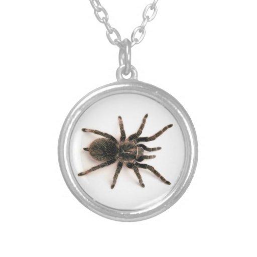 Collar de la araña del Tarantula