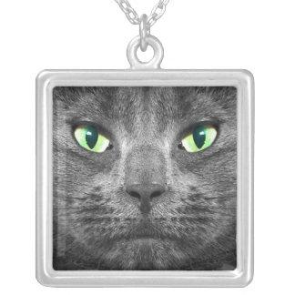 Collar gris hermoso del gato de George