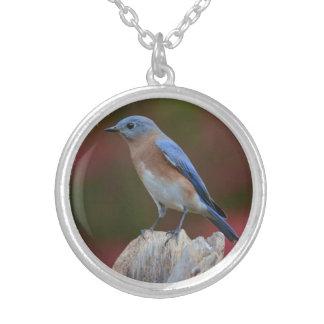 Collar imponente del Bluebird