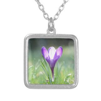 Collar Plateado Azafrán púrpura en primavera