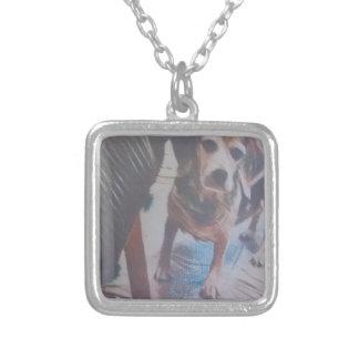 Collar Plateado Beagle curioso