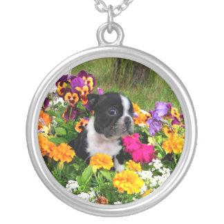 Collar Plateado Boston Terrier