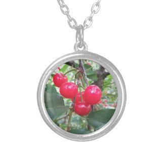 Collar Plateado Cerezas rojas de Montmorency en árbol en huerta de