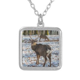 Collar Plateado Ciervo común en nieve