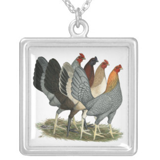 Collar Plateado Cuatro gallinas de Gamefowl