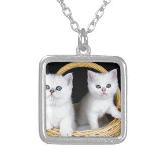 Collar Plateado Dos gatitos blancos en cesta en background.JP