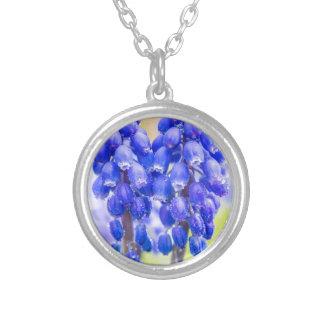 Collar Plateado Dos jacintos de uva azules en primavera