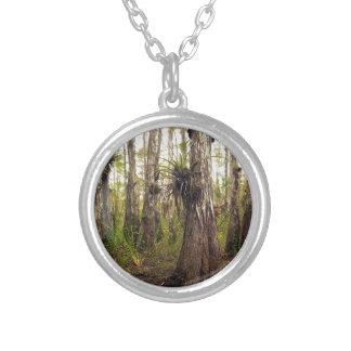 Collar Plateado Epiphyte Bromeliad en el bosque de la Florida