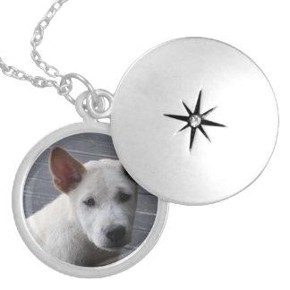 Collar Plateado Locket conmemorativo del mascota - plata plateada