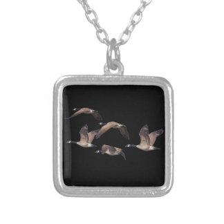 Collar Plateado Multitud de gansos salvajes