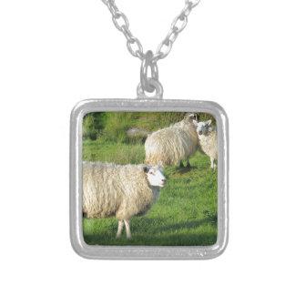 Collar Plateado Ovejas irlandesas