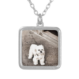 Collar Plateado perro malhumorado fullsizeoutput_c75