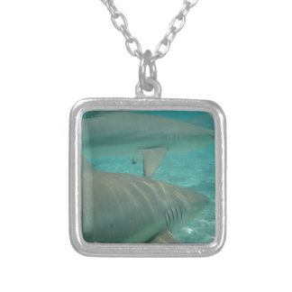 Collar Plateado shark