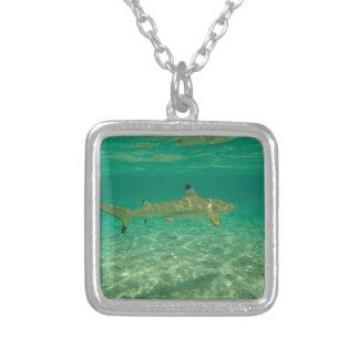 Collar Plateado Shark in bora bora
