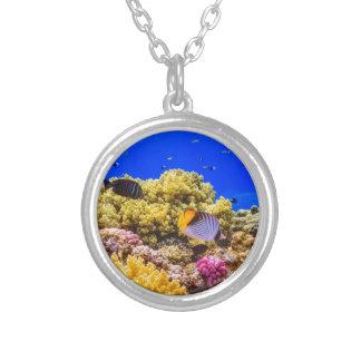 Collar Plateado Un arrecife de coral en el Mar Rojo cerca de