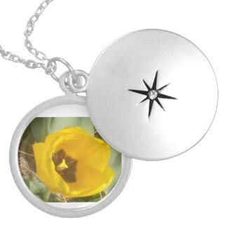 Collar Plateado Un tulipán amarillo en The Sun