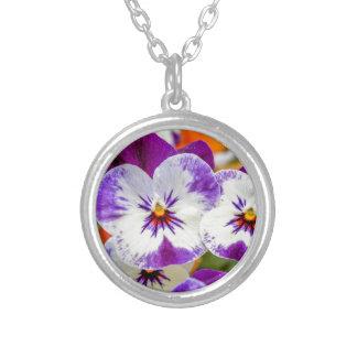 Collar Plateado violeta en el jardín