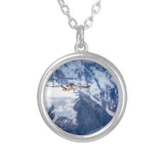Collar Plateado Vuelo patagón austral del pájaro
