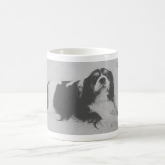 Colocación de la taza retra del perro