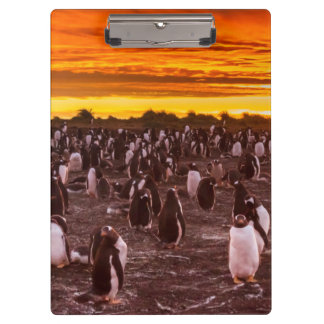 Colonia en la puesta del sol, Malvinas del