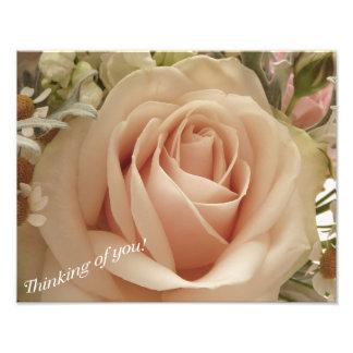 Color de rosa amelocotonado foto