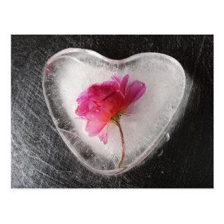 Color de rosa congelado postal