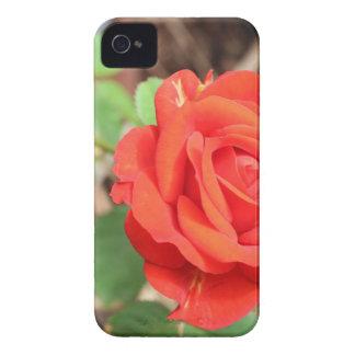 color de rosa funda para iPhone 4 de Case-Mate