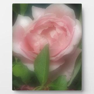 Color de rosa placa expositora