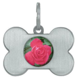 color de rosa placa para mascotas